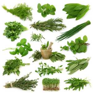 All Kind Of Herbal Extract and Botanical Extract